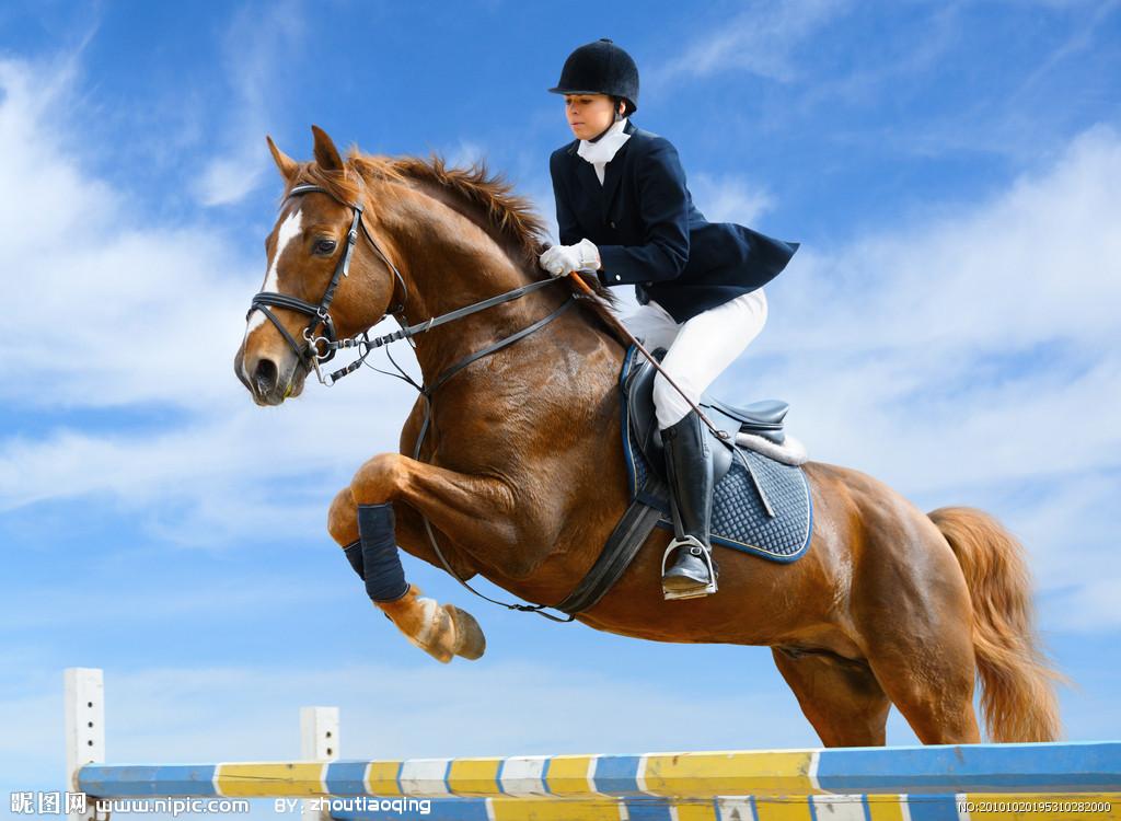 壁纸 动物 马 骑马 1024_750