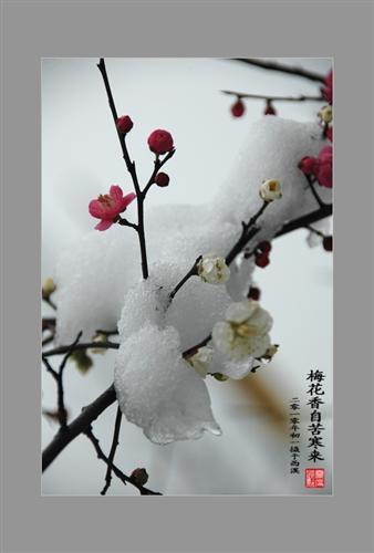 梅花傲立雪中微信头像