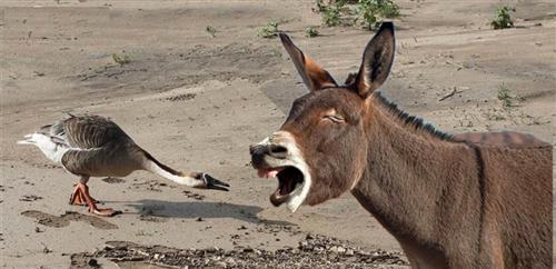 蒙驴叫唤,雁落平沙.