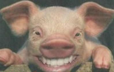 可爱的真猪照片高清
