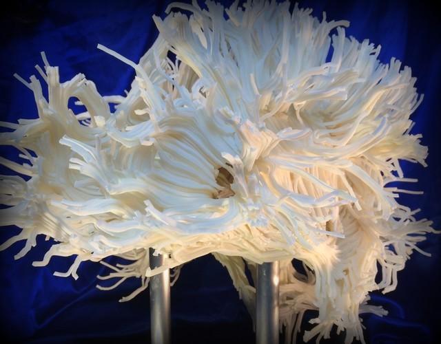 超大利好:3d打印人脑内部结构
