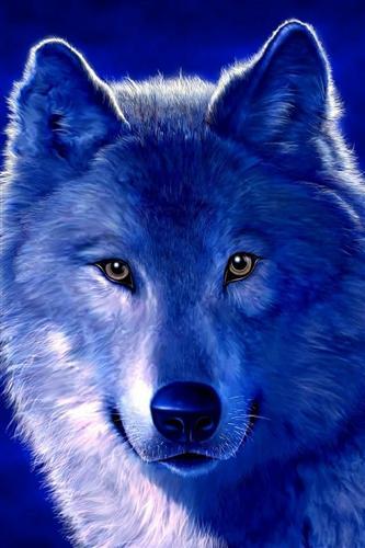 手机壁纸动物图片狼