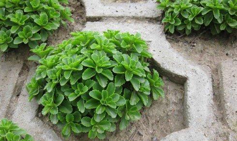 蒙草抗旱---推行抗旱植物绿化 ,造福子孙后代.