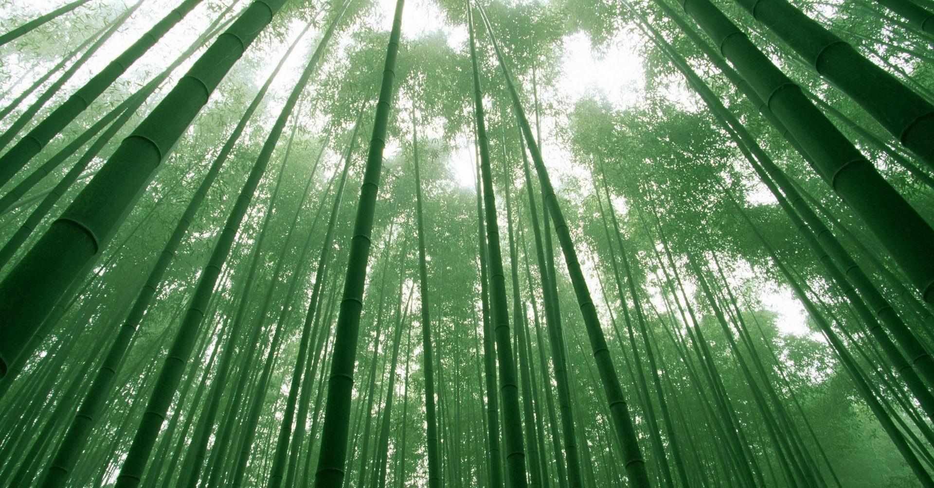 竹子用了4年的时间,仅仅长了3cm,从第五年开始