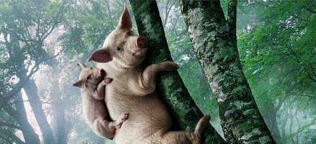 母猪上树 表情包 图片合集图片