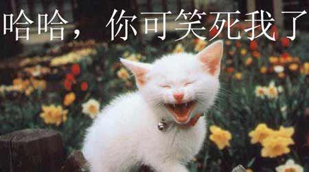 动物大笑图片带文字的