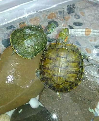 有两只乌龟在田边头对头一动不动,这时一个专家问旁边的老农,这两