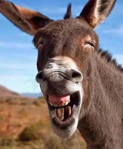 如果吼叫能解决问题,驴将统治世界(精辟)
