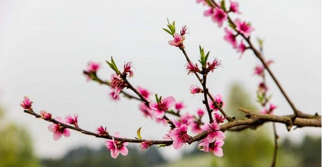 乐享宝:春季投资小建议